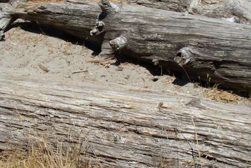 Wood Dirt Logs Brown Texture Material Nature