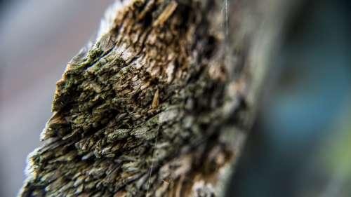 Wood Closeup Outdoor Nature Tree