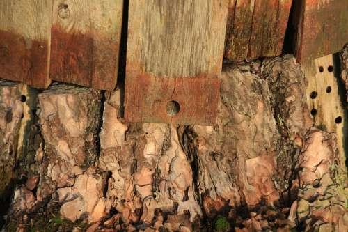 Wood Boards Stump Holes Bark