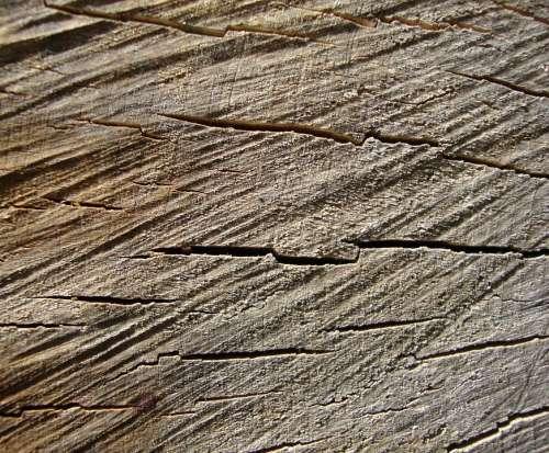 Wood Grain Tree Stump Tree Rings Trunk Texture Log