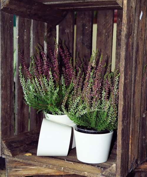 Wooden Box Heather Flower Pots Still Life