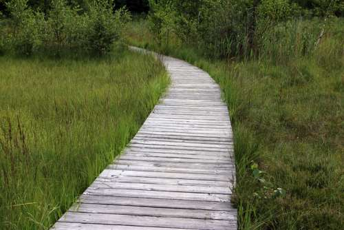 Wooden Track Away Path Trail Planks Web Nature