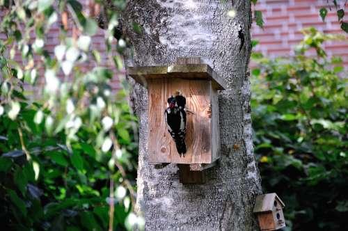 Woodpecker Nature Birch Tree Bark