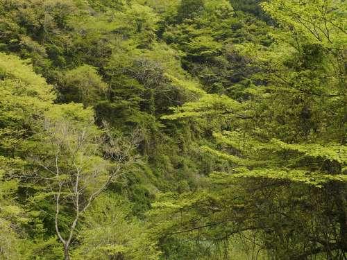 Woods Green Wood Mountain