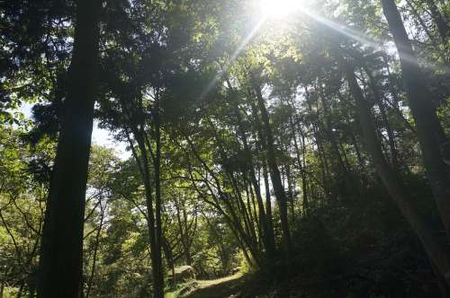Woods Wood Sun Solar Light Shadow