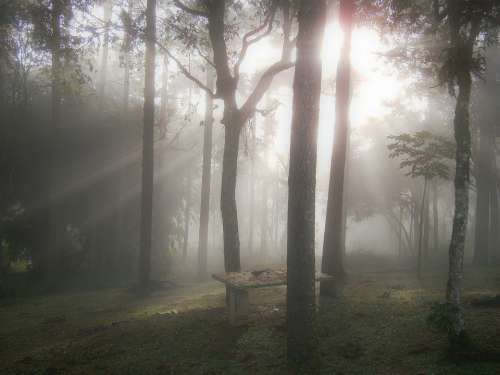 Woods Dawn Ray Of Light Winter Winter Scene