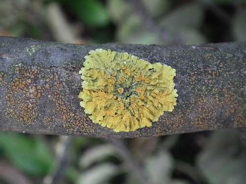 Woody Mushroom Tree Branch Mushrooms Brown