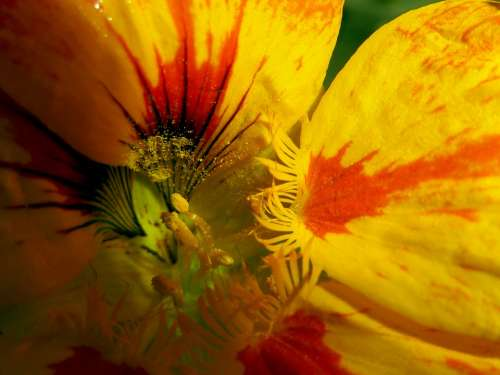 Yellow Flower Nature Plant Macro Pollen Close-Up