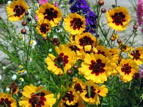 Yellow Daisies Flowers Summer Flowers Floral Bright