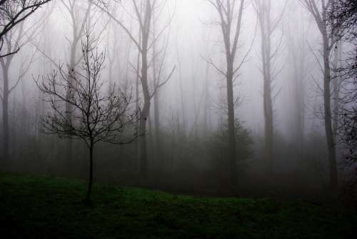 Young Tree Fog Mist Morning Wood Nature