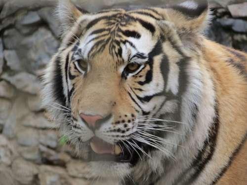 Zoo Leone Sorocaba Brazil