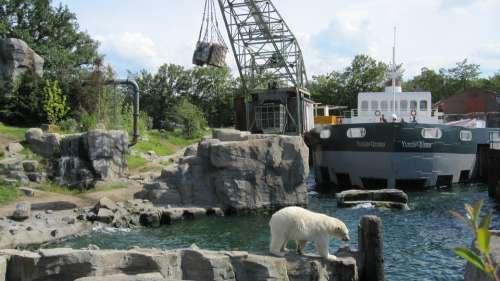 Zoo Hannover Adventure Zoo Yukon Bay Polar Bear