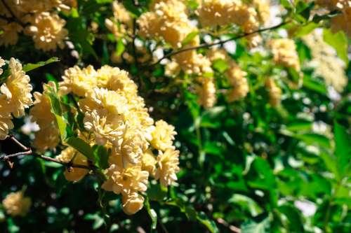 Flowers in Trsteno Arboretum, Croatia