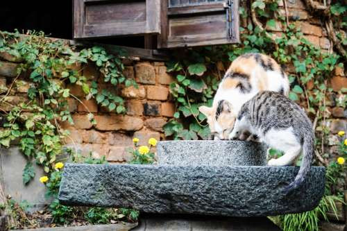 Cats playing in Wuyuan Town, Jiang Xi, China.