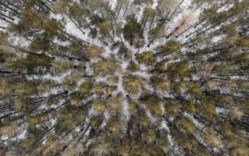 A Drone View From Overhead Of A Coniferous Forest In Winter Photo