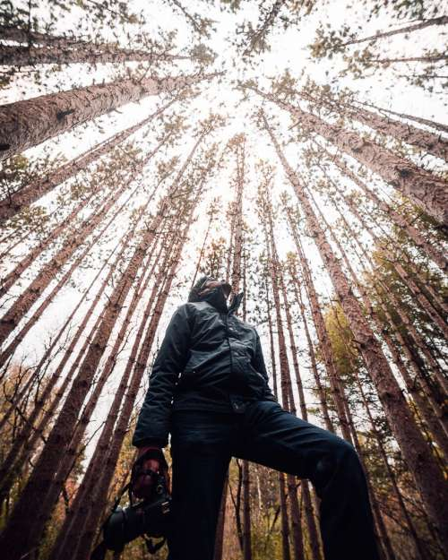 A Man With A Camera Stares Up At The Sky Through The Trees Photo