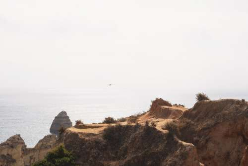 A Seagull Glides Over A Cliffside Photo