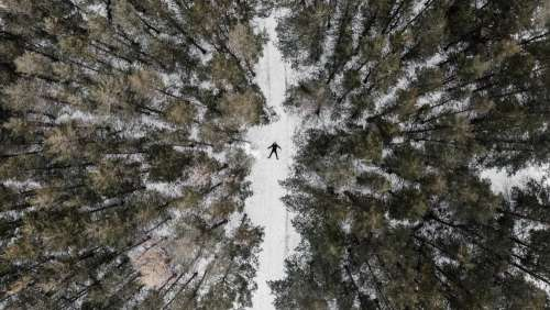 An Overhead View Of A Snow-Covered Coniferous Forest In Winter Photo