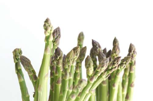 Asparagus On White Photo