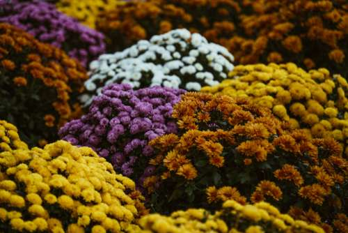 Autumn Flowers In Bloom Photo