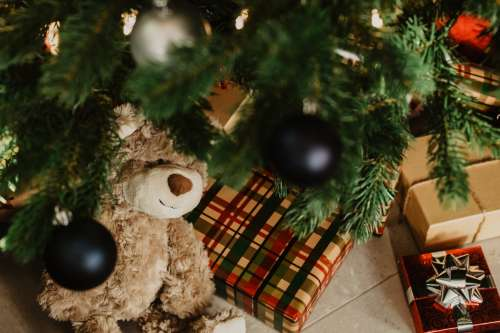 Bear And Gifts Under Christmas Tree Photo