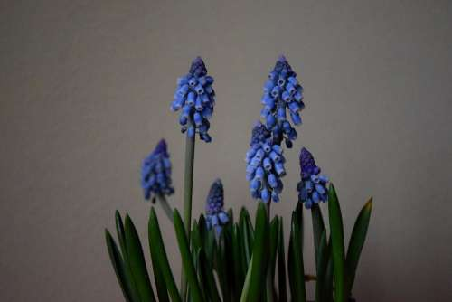 Blue Bell Shaped Flowers Photo