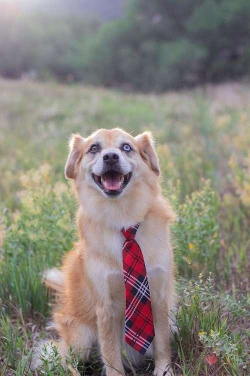 Boss Dog Photo