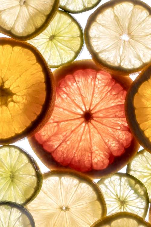 Bright Light Through Citrus Slices Photo