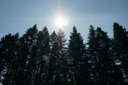 Bright Sun Above Tall Forest Photo