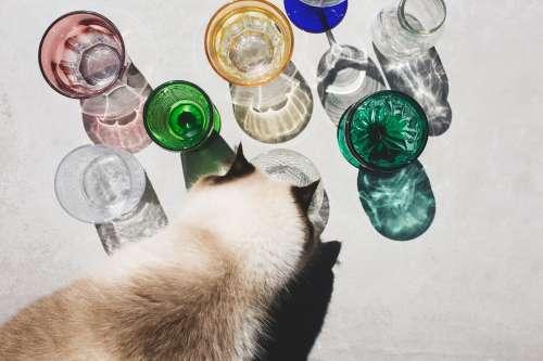 Cat Investigates Glassware In Light Photo