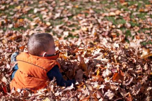 Child Playing In Fall Leaves Photo