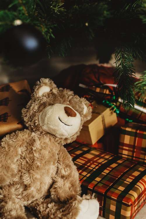 Christmas Tree Teddy Bear Photo