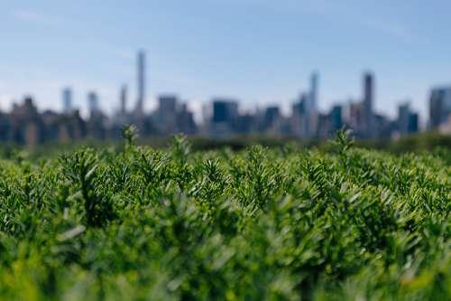 City Behind Greenery Photo