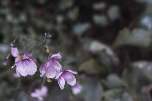 Close Up Of A Purple Perennial Flower Photo