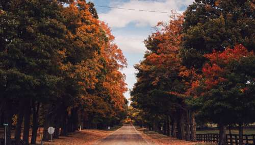 Country Road In Fall Photo