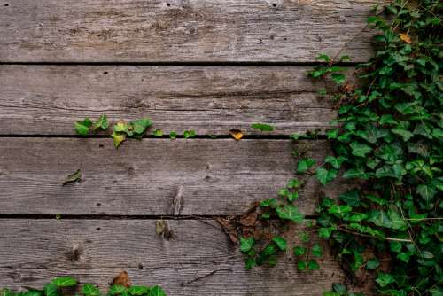 Deck And Vines Texture Photo