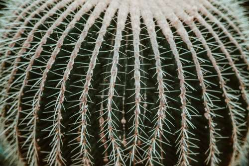 Desert Cactus Thorns Photo