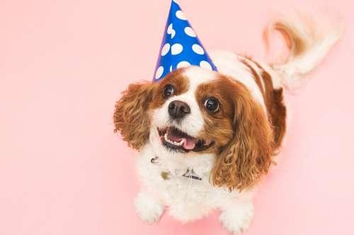Dog In Birthday Hat Photo