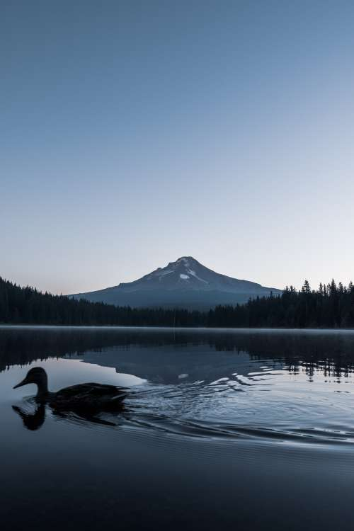 Duck Paddles Past Mountain On Calm Lake Photo