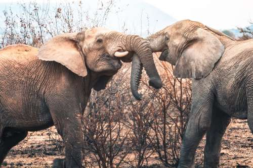 Elephant Hugs Are The Best Photo