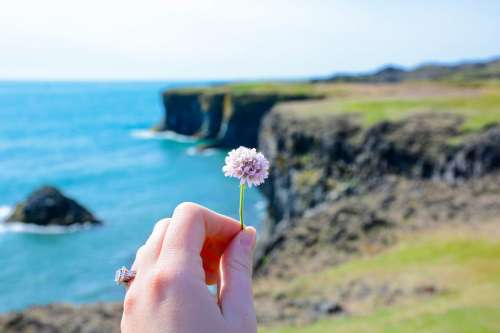 Flower in Hand In Front Of Cliffs Photo