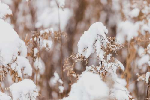 Fluffy Winter Snow On Dried Leaves Photo