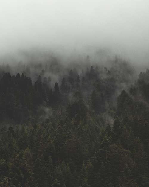 Fog And Mist Roll Over Tall Evergreen Forest Photo