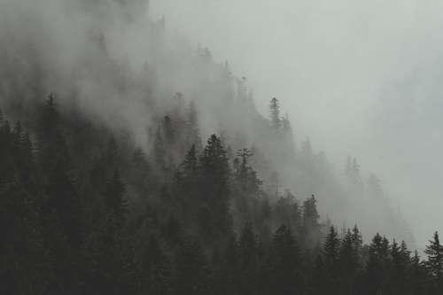 Fog Rolls Through forest Hillside Photo