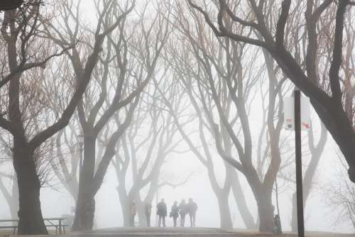 Friends Walk Through Foggy Trees Photo