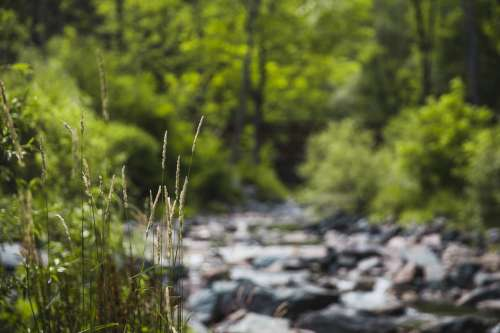 Grass By Creek Photo