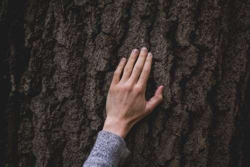Hand On Tree Bark Photo