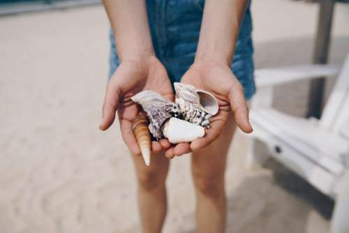 Handful Of Shells Photo