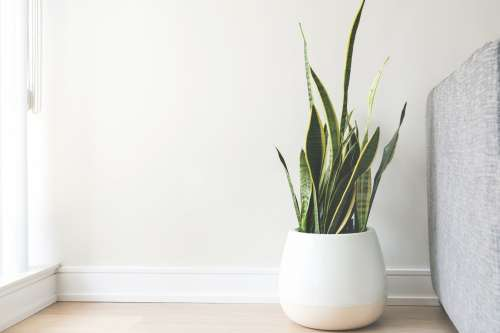 House Plant In White Pot Photo