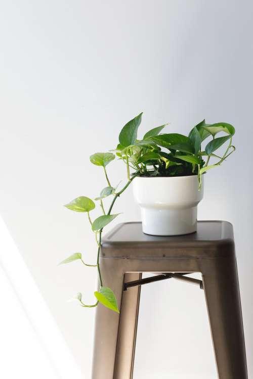 Houseplant On Stool Photo
